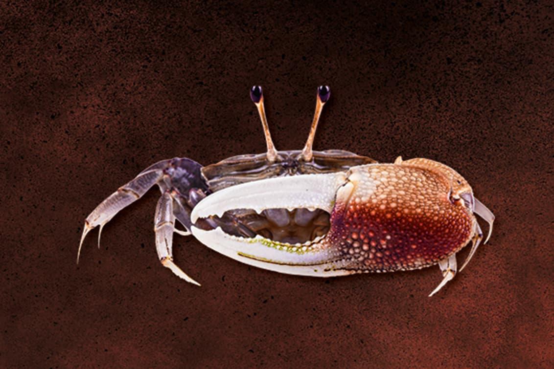 RP243-fb-crabs-3
