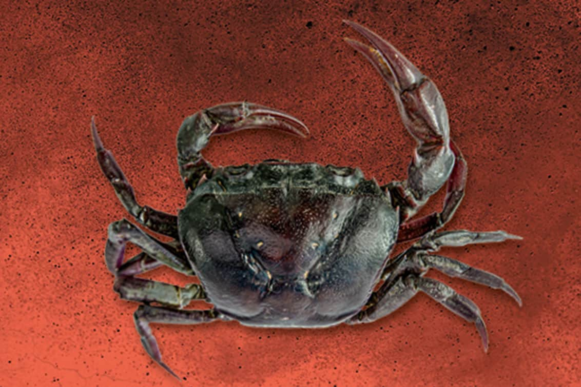 RP243-fb-crabs-7